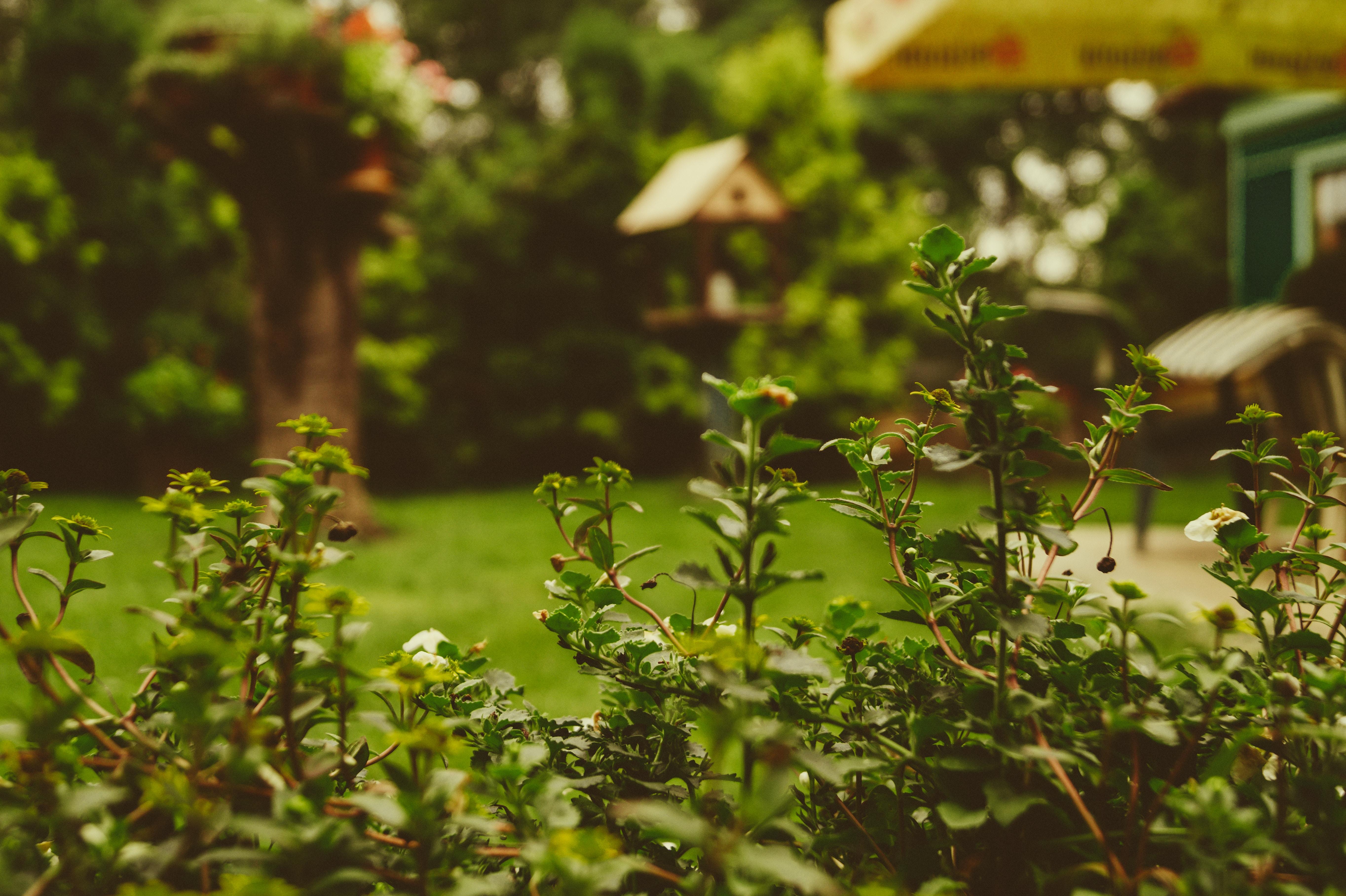Cuida el jard n mientras cuidas tu coraz n bbva mi for Articulos jardin